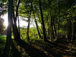 L'ECRITURE C'EST... dans REFLEXIONS PERSONNELLES Alentours-école-VALLIERES-automne-mardi-13-Octobre-2009-064-300x225