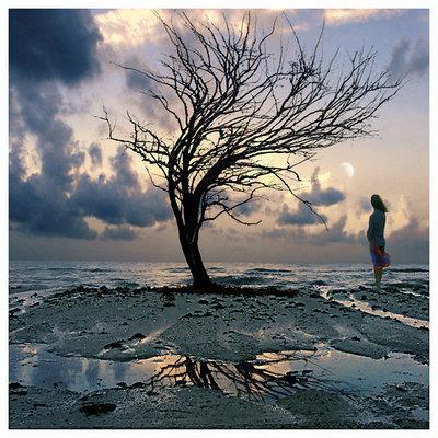 LES CHOSES LES PLUS DURES... dans REFLEXIONS PERSONNELLES arbre-souffrance
