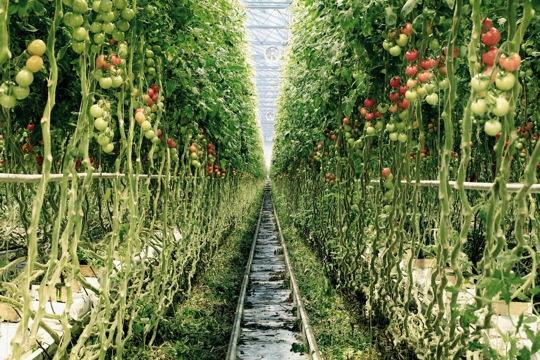Pollution le souffle c 39 est ma vie for Vers dans les tomates