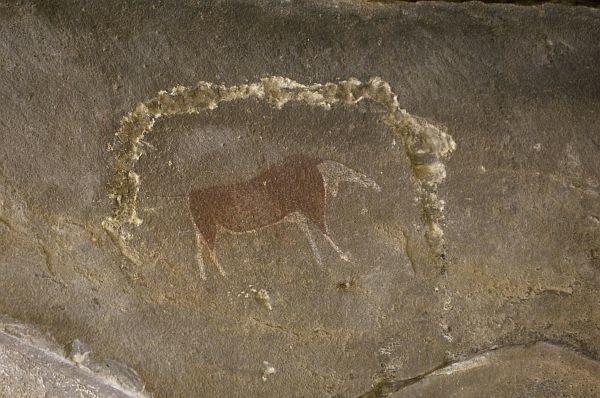 LA PLUS ANCIENNE DIVERSIFICATION GENETIQUE HUMAINE REMONTE A 100 000 ANS dans REFLEXIONS PERSONNELLES rock+art