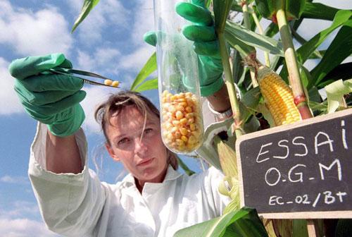 SANTE PUBLIQUE. OGM: COMMENT UNE ETUDE BIDONNEE PAR MONSANTO A ETE VALIDEE PAR LES AUTORITES SANITAIRES (Sophie CHAPELLE / BASTA) dans REFLEXIONS PERSONNELLES ogm