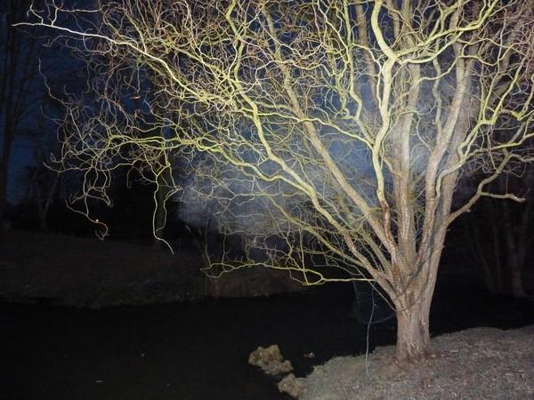arbre DROITS DE L'HOMME