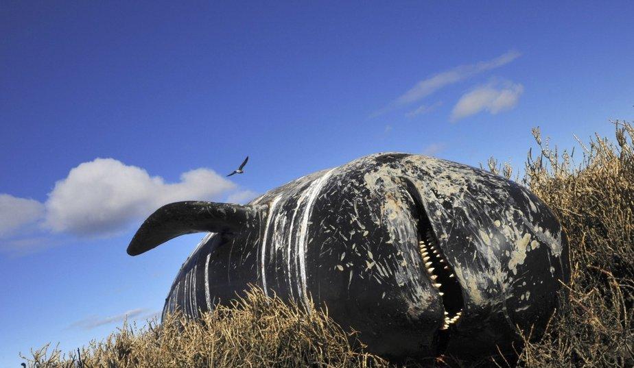 HUIT DES NEUF ANNEES LES PLUS CHAUDES ONT EU LIEU DEPUIS 2000, SELON LA NASA dans REFLEXIONS PERSONNELLES baleine-echouee_galleryphoto_paysage_std
