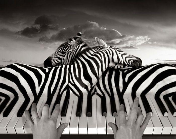 LE PIANO ZEBRE dans REFLEXIONS PERSONNELLES le-piano-zebre