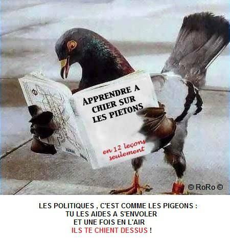 LES POLITIQUES, LES PIGEONS...(RoRo) dans REFLEXIONS PERSONNELLES les-politiques-et-les-pigeons