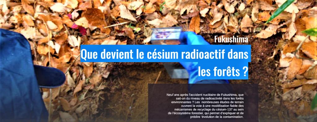 IRSN Que devient le césium radioactif dans les forêts de FUKUSHIMA