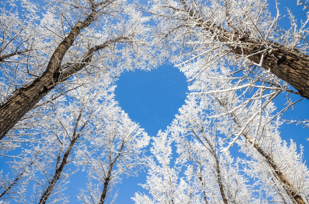 Arbres et coeur